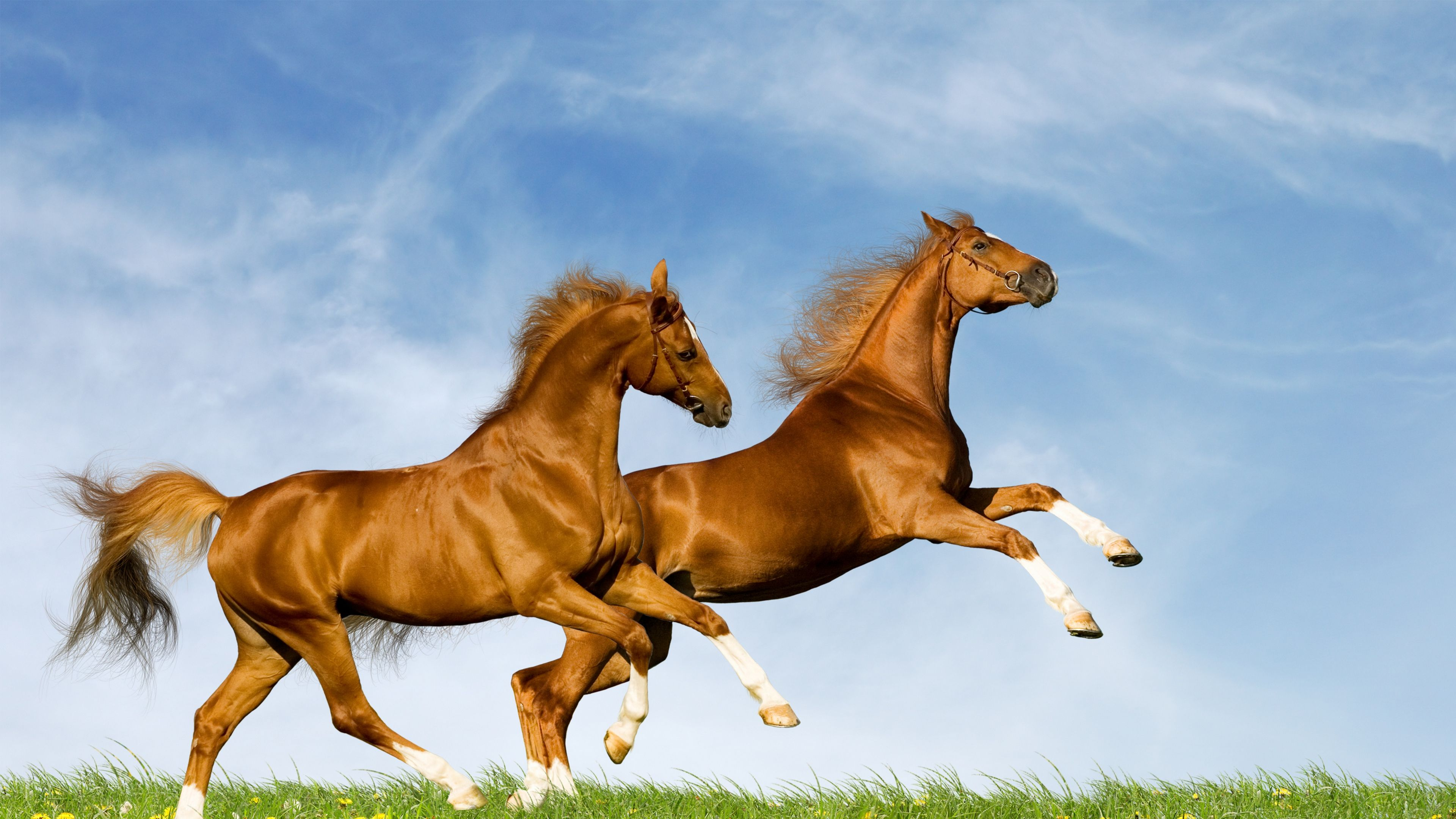 Great Wallpaper Horse Ultra Hd - abdd6e162a8dd861f0c9f95c2fe4436c  Pic_605811.jpg