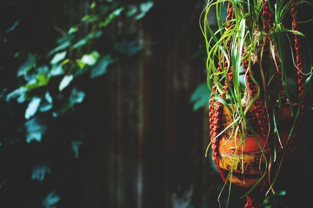 #hanginggarden