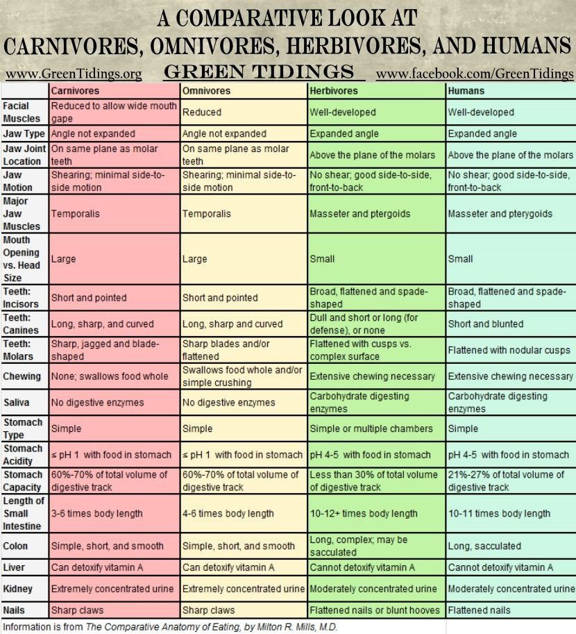 Green Tidings: A Comparative Look at Carnivores, Omnivores ...