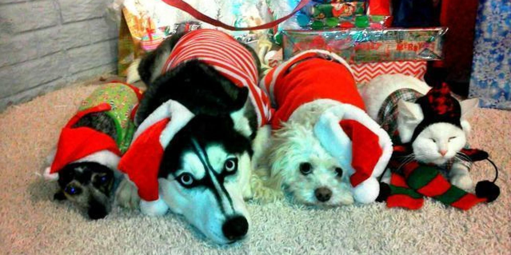 Animals Christmas Facebook Covers - | ∾ Facebook Covers 101 ...
