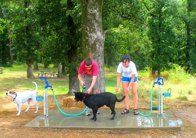 Shelby farms dog washing station farm dogs farming and dog dog washing station solutioingenieria Image collections