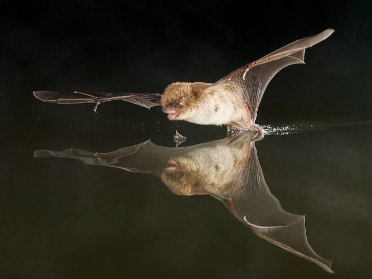 How Do Swarming Bats Avoid Crashing Into Each Other  Pictures of