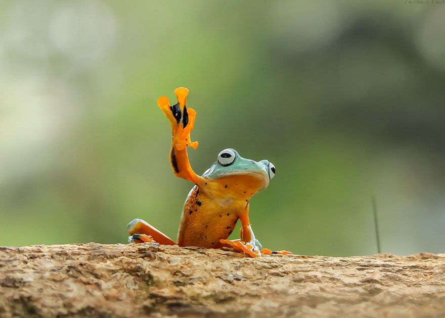 les-magnifiques-photos-de-grenouilles-de-tanto-yensen-4
