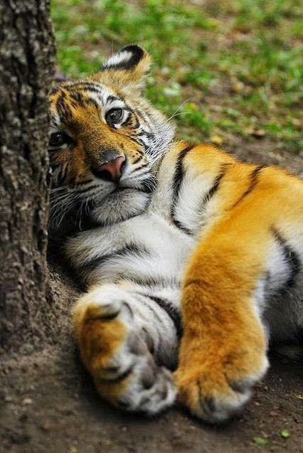 Beautiful nature & Creatures - コミュニティ - Google+