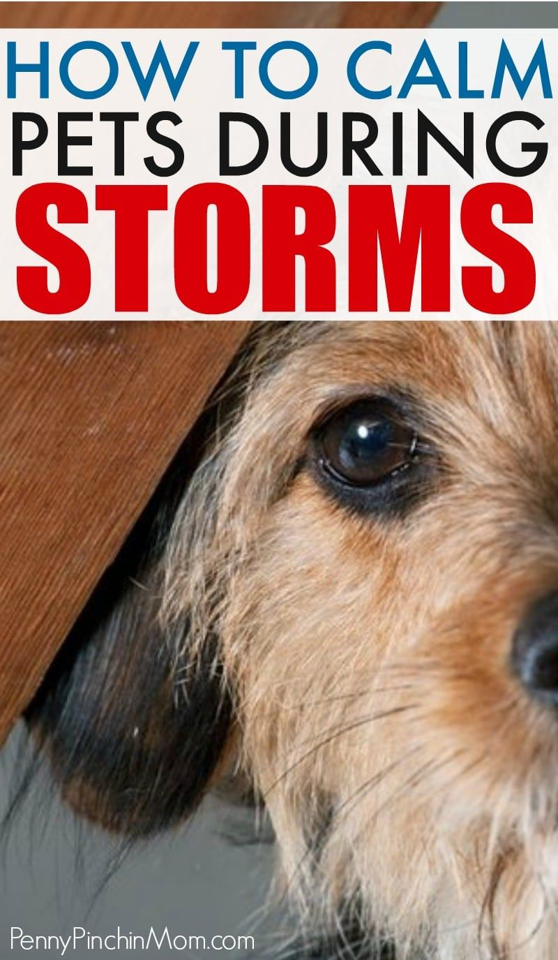 Keeping Your Pet Calm During Storms And Fireworks Pet Calming