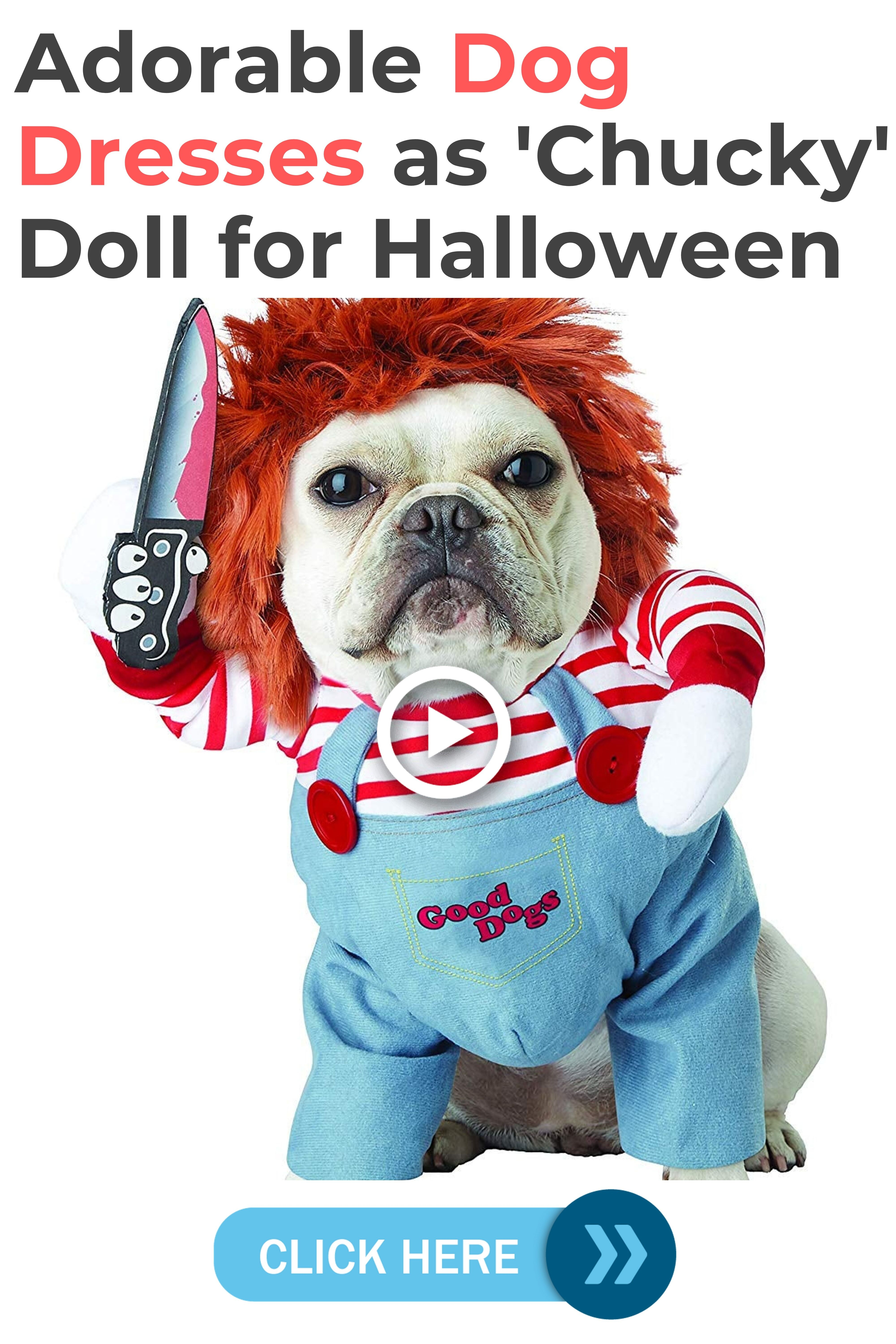 Is This Puppy Too Cute To Be A Murderer Romeo S Halloween Costume