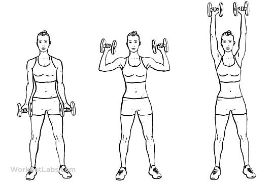 Dumbbell Biceps Curl to Shoulder Press | Ejercicios, Ilustraciones