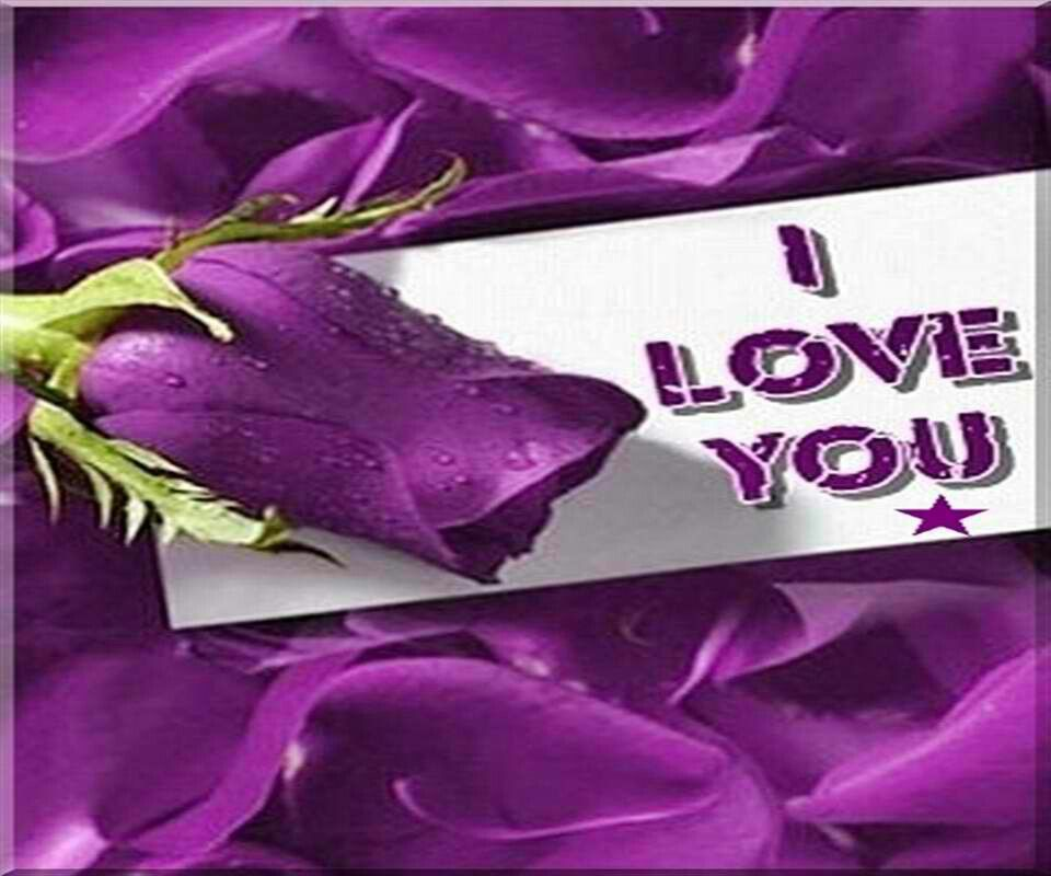 I Love You With Purple Rose Love Flowers Purple Love All