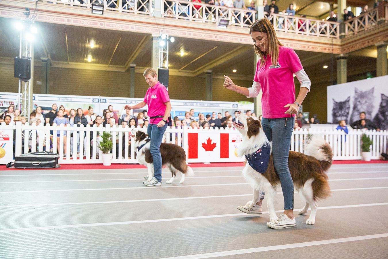 Melbourne Dog Lovers Show 2019 May 3 To 5 Australian Dog Lover Wonderdogs Thewonderdogs Dogtricks Dogloversshowmelbourne Dogl Dog Lovers Dog Friends Dogs Day Out