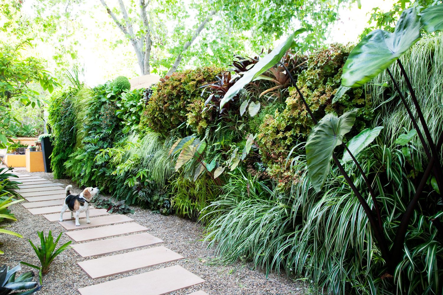 Follow These Steps To Create Your Own Living Wall Of Verdant, Healthy  Plants.