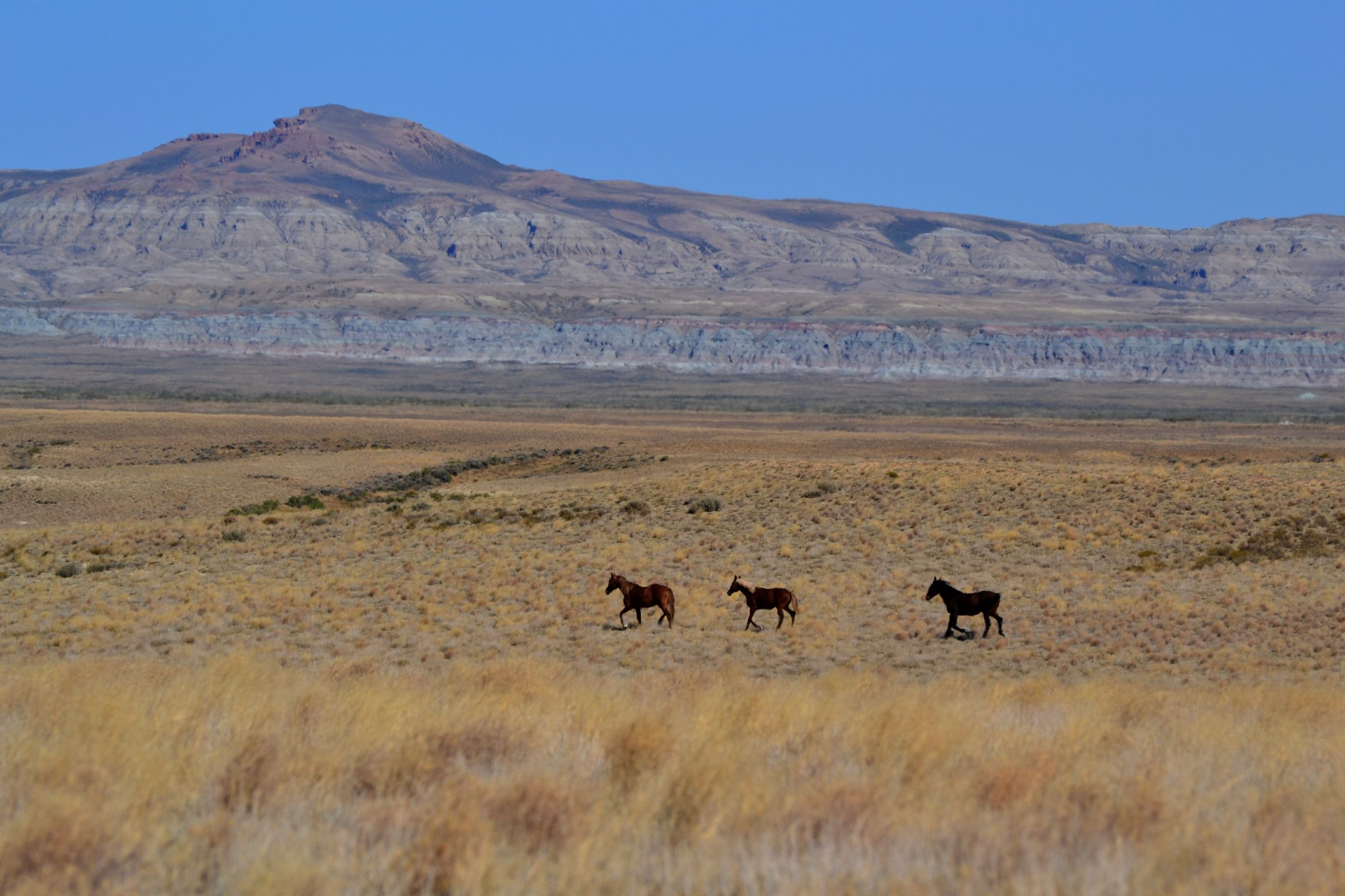 Red Desert camping trip- Wild horses at the Honeycomb ...