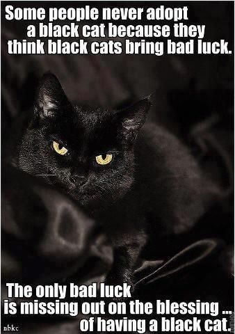 My black cat is the sweetest, funniest little animal I've ever seen. :)