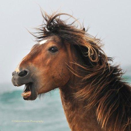 Calendar ‹ Sable Island Horses
