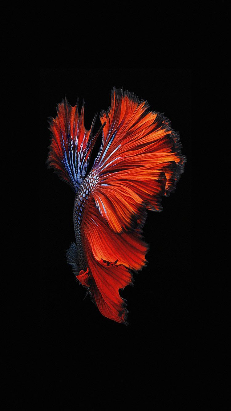 papers co an81 apple ios9 fish live background dark red 33 iphone6