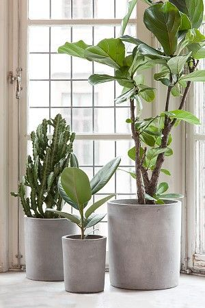Love The Raw Concrete Look Against Soft Green Foliage