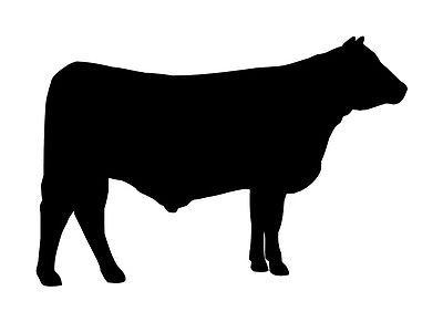 Details About Angus Cow Cattle Decal Vinyl Sticker Car Van Laptop