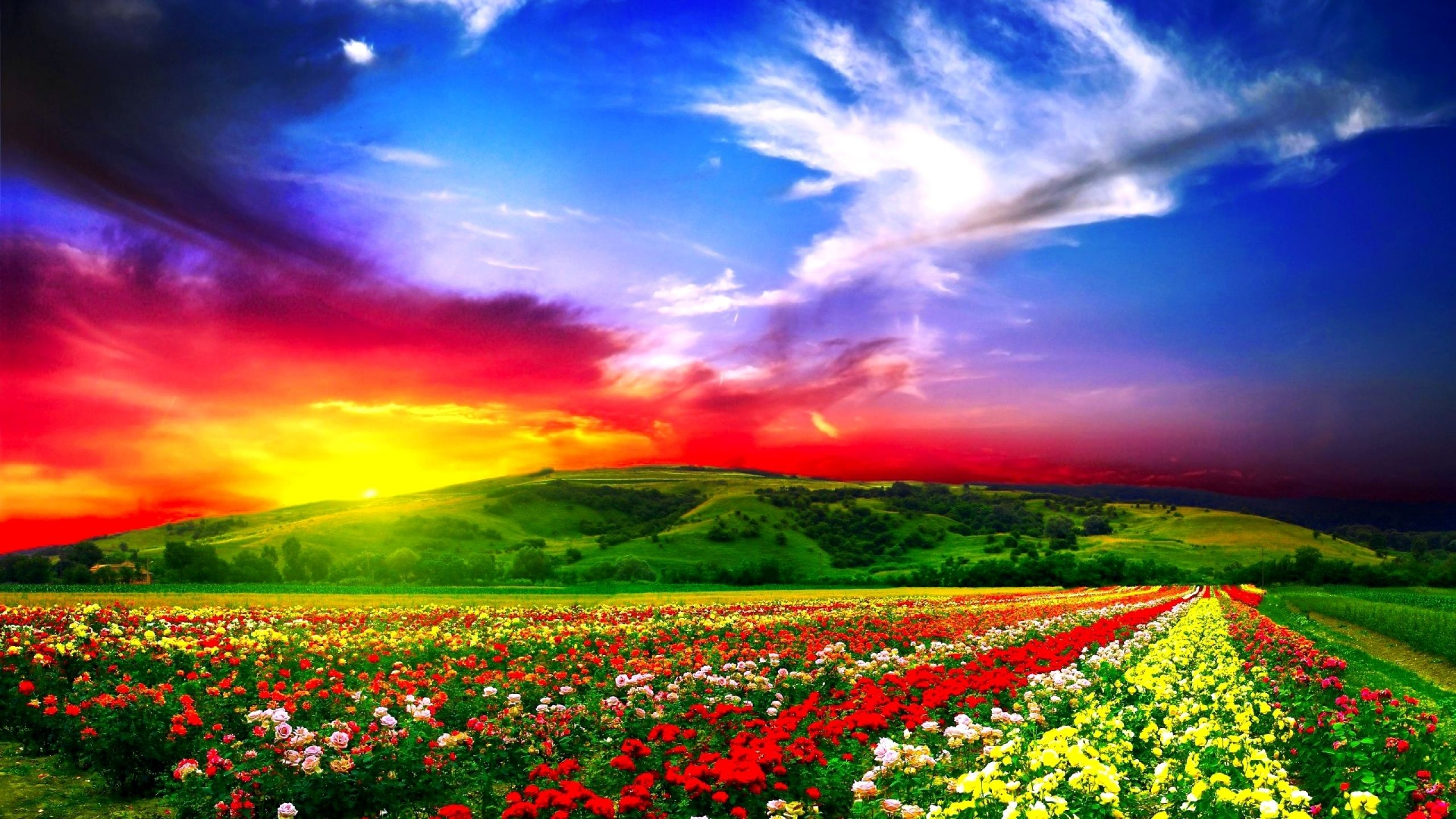 Download wallpaper x flowers field beautiful mac imac