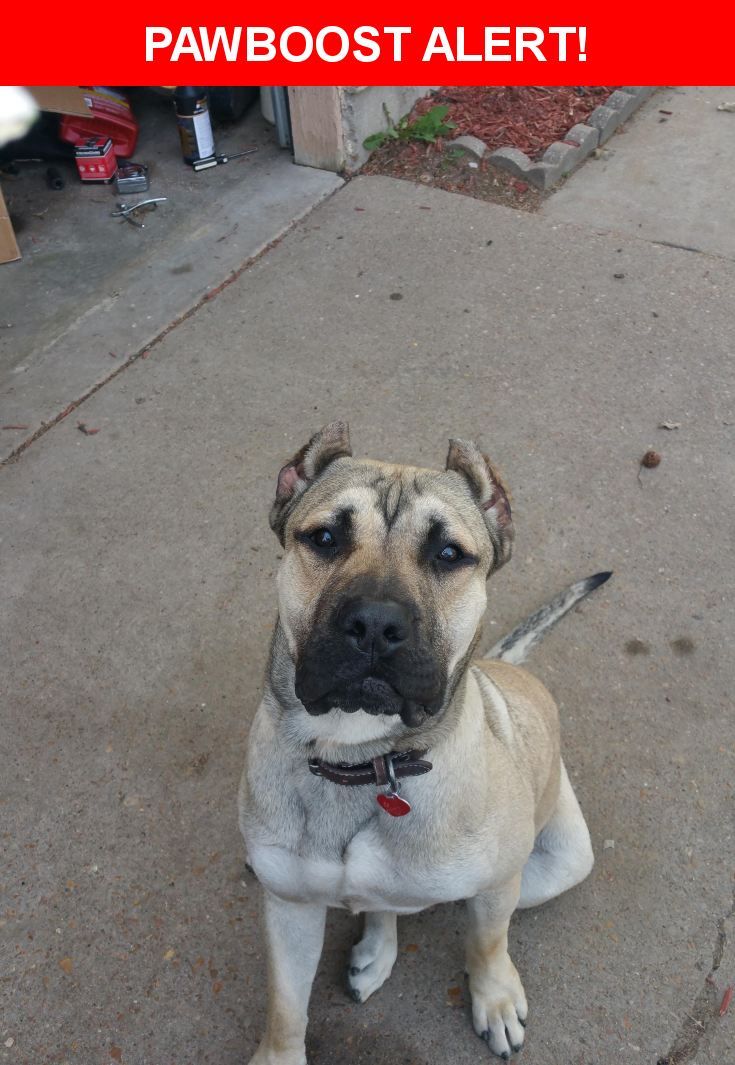 Please spread the word! Tank was last seen in Florissant, MO 63033.  Description: very friendly and microchipped  Nearest Address: parker rd and jerries lane