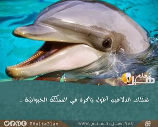 معلومات عامة عن الحيوانات هل تعلم Animals Animal Facts Fish Pet