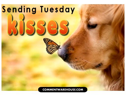abe548a1280660e84941f1a8612443f2 sending tuesday kisses tuesdaymotivation funny dog memes