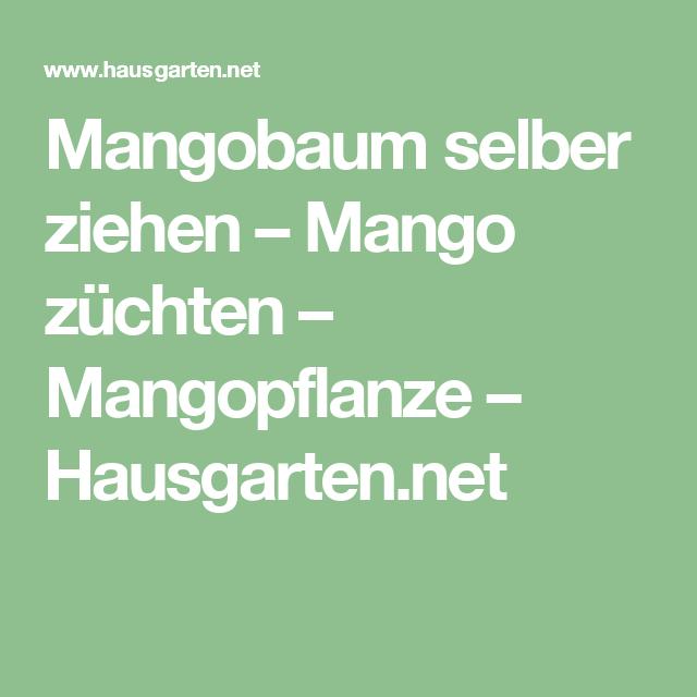 mangobaum selber ziehen mango z chten mangopflanze balkon pflanzen. Black Bedroom Furniture Sets. Home Design Ideas