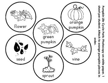 image regarding Pumpkin Life Cycle Printable identify Pumpkin Lifestyle Cycle Cell Kscience: pumpkins Pumpkin
