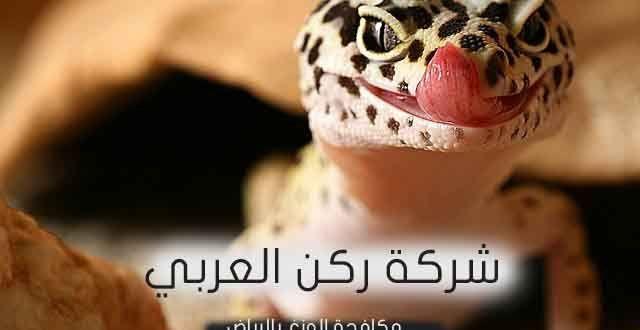 شركة مكافحة الوزغ فى الرياض شركة مكافحة الوزغ بالرياض يتواجد الوزغ في البيئة الصحراوية والزراعية بأشكال عديدة وأنواع مختلفة و تتواجد عا Salamander Animals