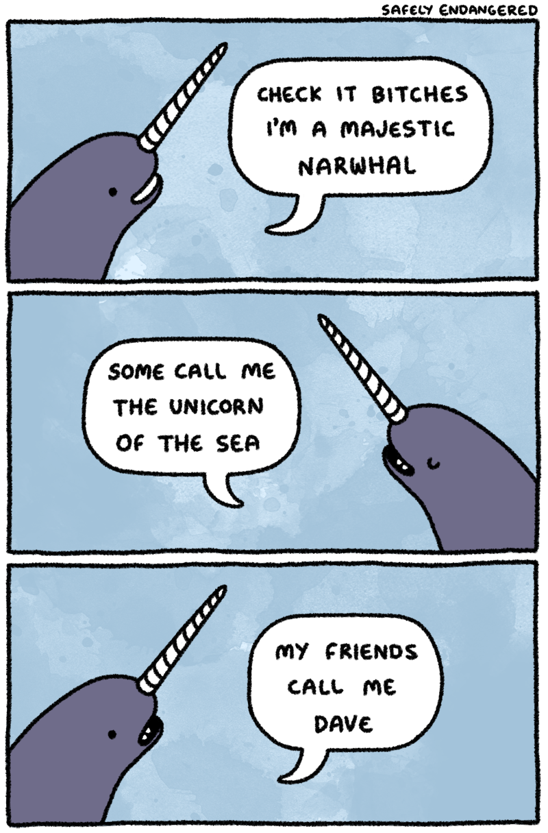 Narwhal and unicorn cartoon narwhal jokes funny pictures - Funny Pictures About I M A Majestic Narwhal Oh And Cool Pics About I M A Majestic Narwhal Also I M A Majestic Narwhal