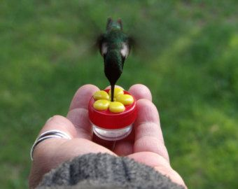 6 Handheld Feeders With 3 Free Adapters For Wrist Feeder Or Ring Humming Bird Feeders Hummingbird Mini Hands