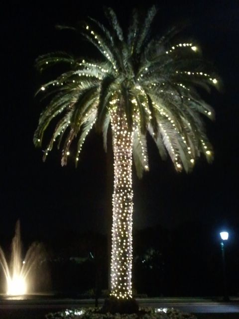 Christmas Lights In Palm Trees.Tropical Christmas Palm Tree With Lights Coastal