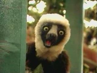 zoboo zoboomafoo google search the pressure of the nfl sundays