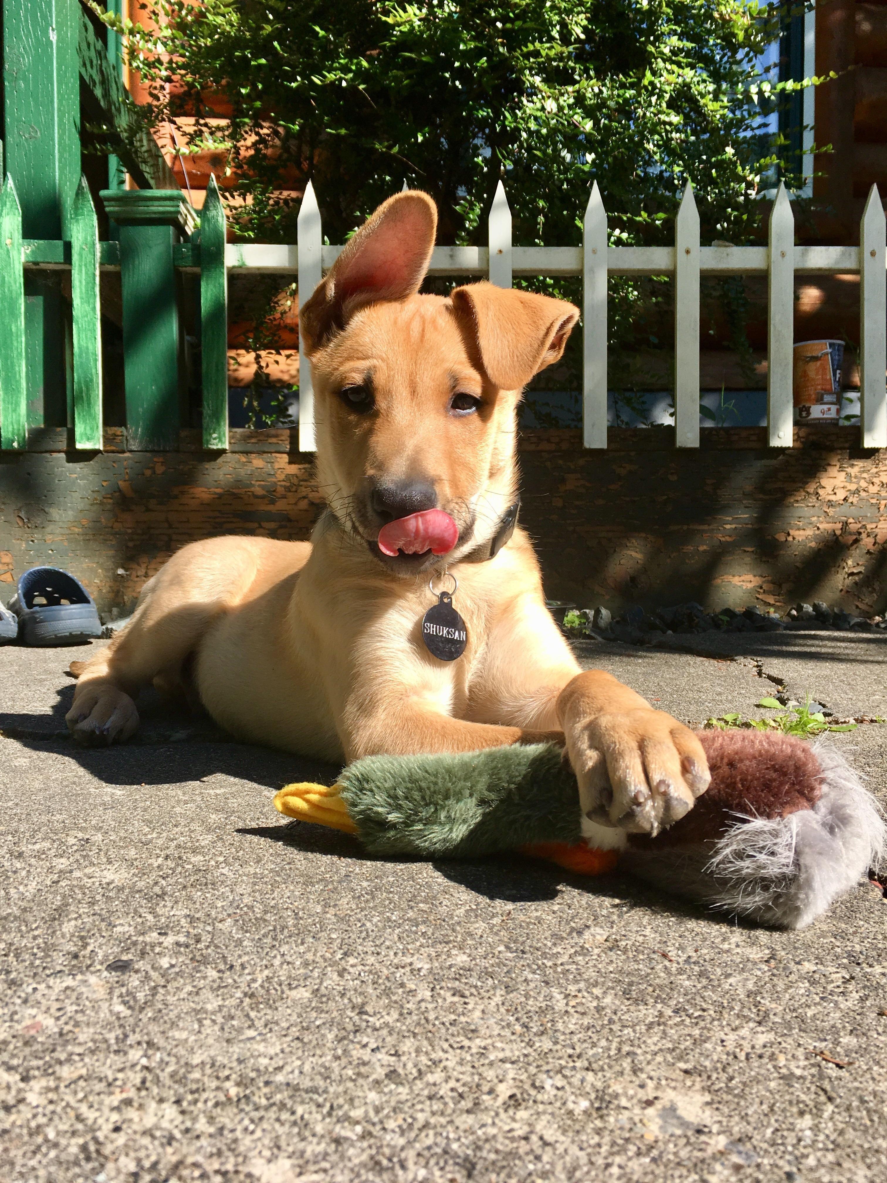 Just a pup and his mallard. https//ift.tt/2l6WrJq Pup