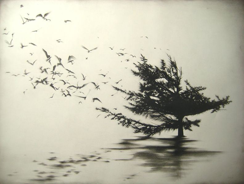 Samuel Jan, Flight from the Tree Top,  charcoal on paper
