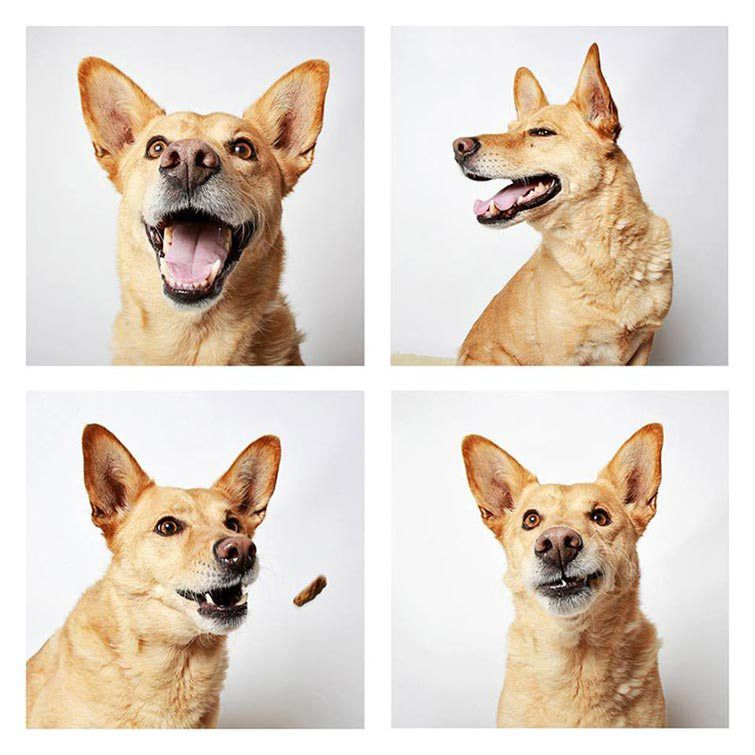 Hilarious Photo Booth Portraits Of Dogs Help Increase Adoption Rates Animal Study Dogs Dog Photoshoot