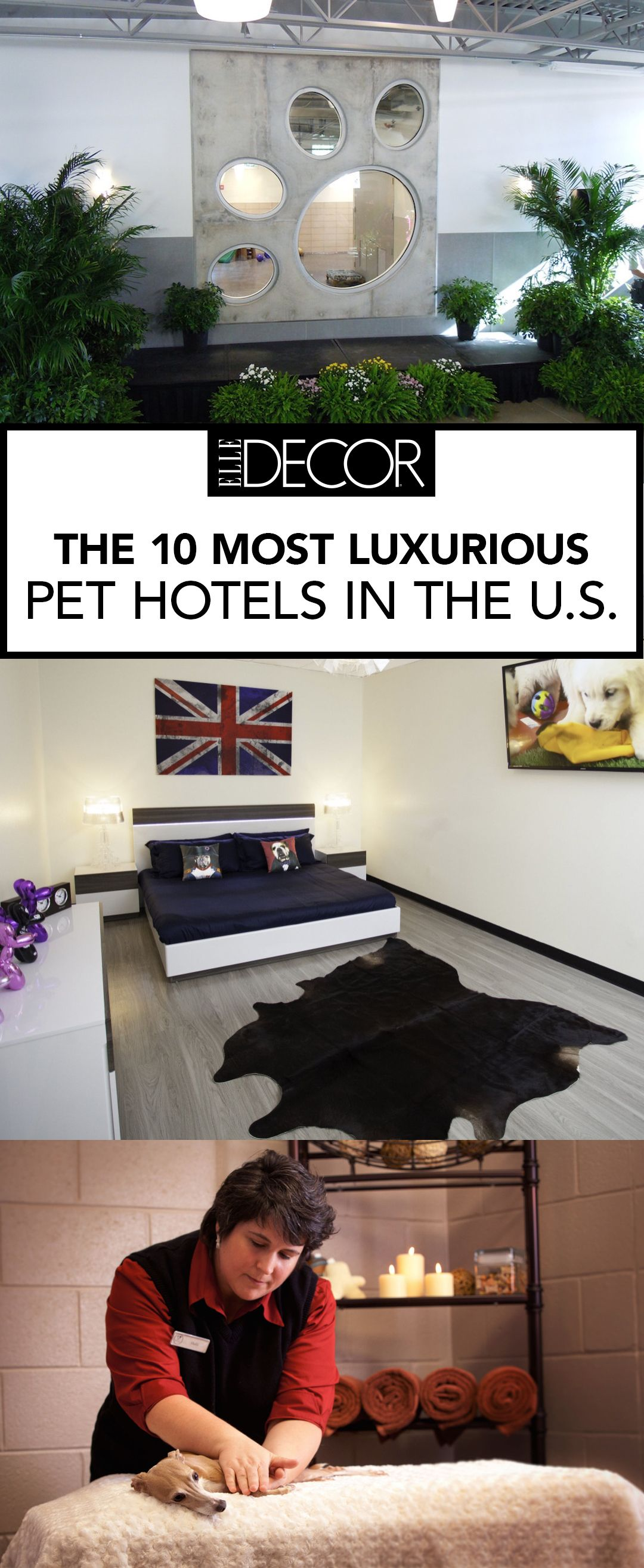 The 10 Most Luxurious Dog Hotels Across The Country Pet