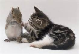 Cat and Squirrel Playing - Yahoo Image Search Results