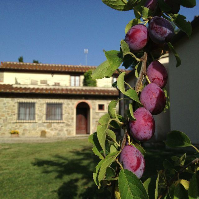 Villa Campestri on AFAR