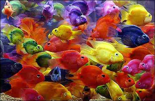 24 Colorful Examples Of Fish Photography Fish Colorful Fish And