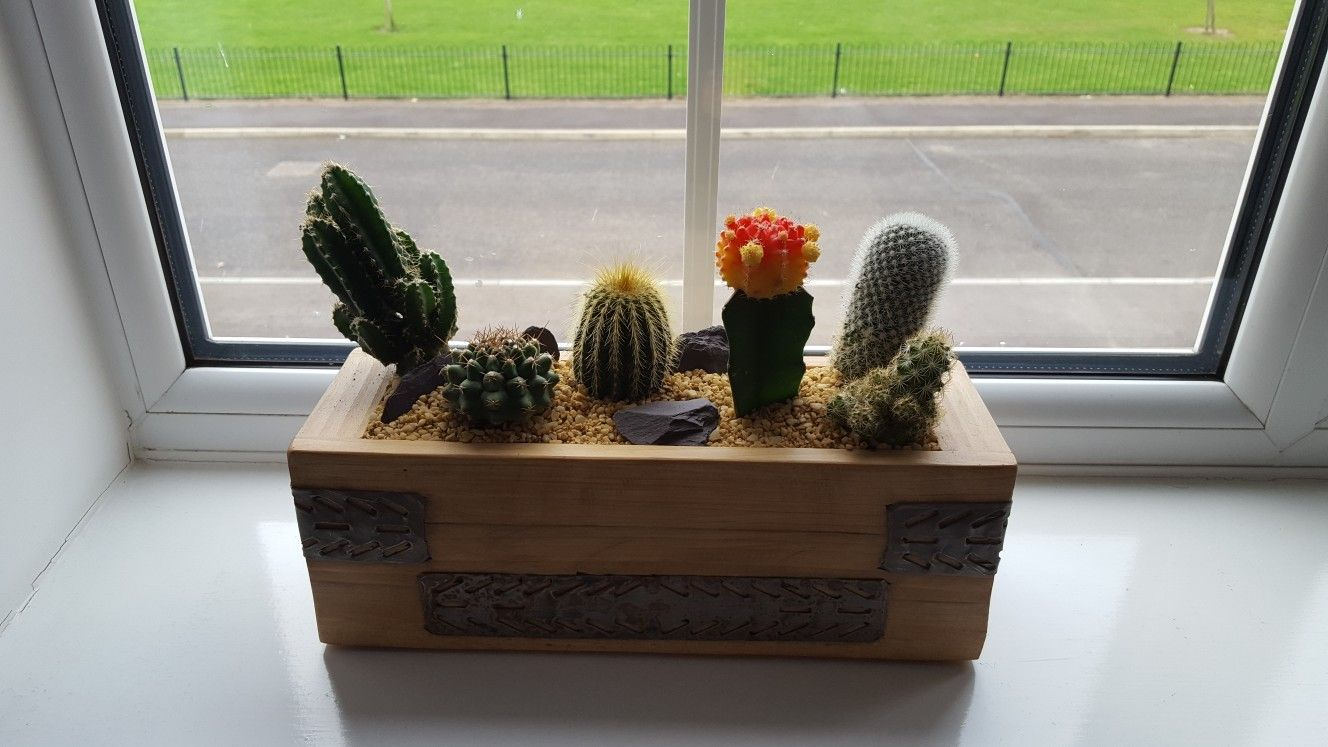 Cactus tray made out of old scaffold board and ties used