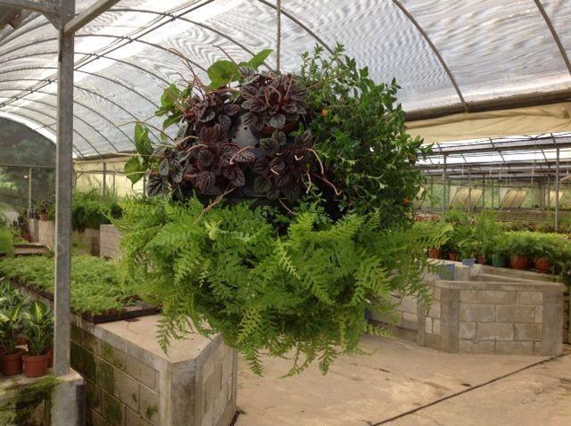 Esfera con plantas