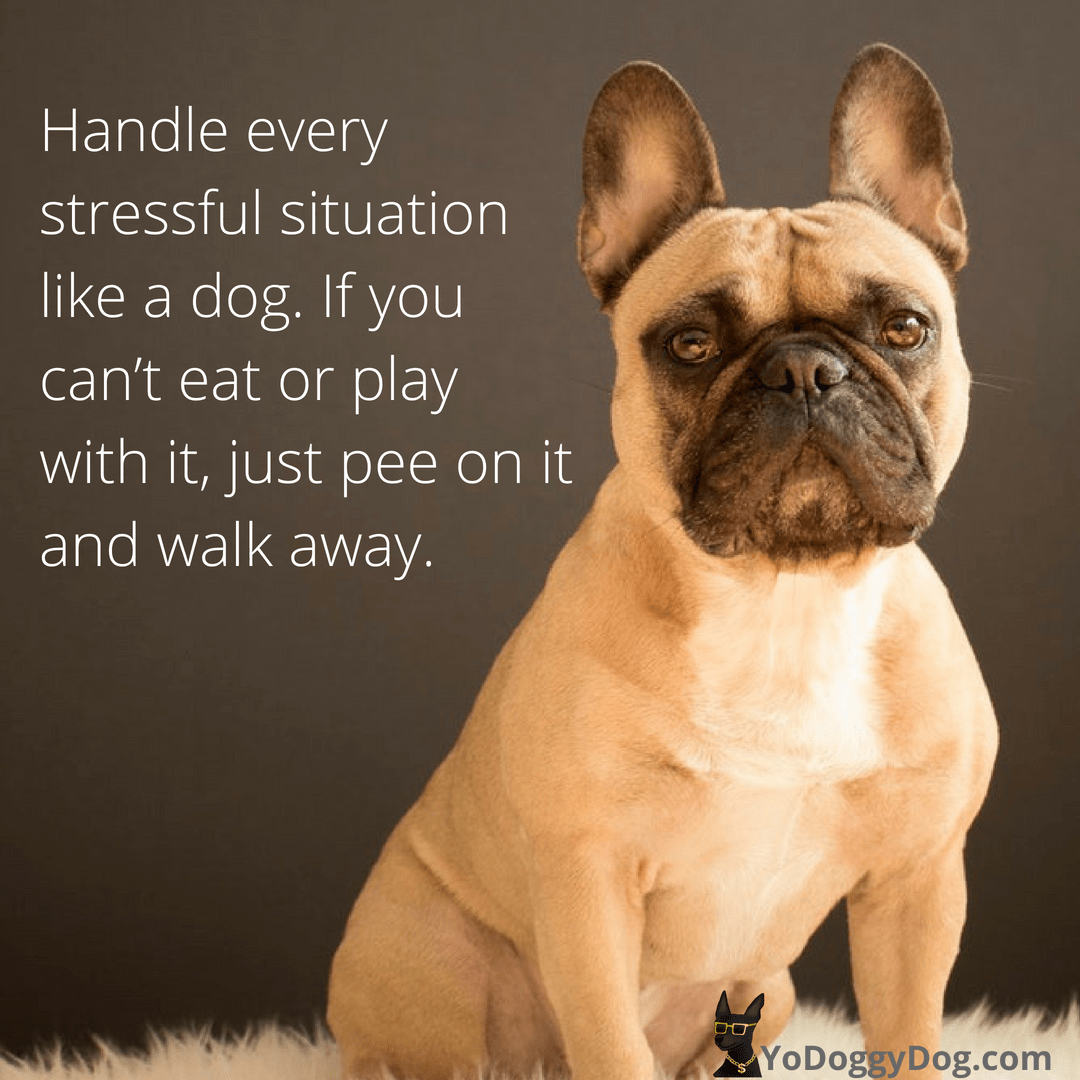 100 Dog Quotes Sayings To Make You Laugh Cry And Love Your Dog Even More Dog Quotes Funny Dog Quotes Funny Dog Memes