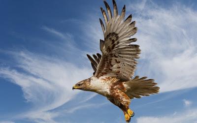 Pin On صور طيور خلفيات رمزيات طيور رائعة