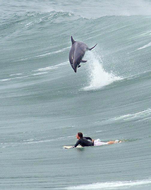Surfing with dolphins around shark bay beach in Western Australia