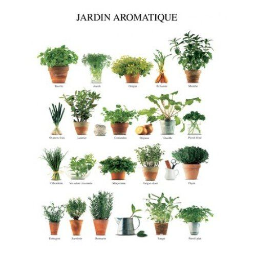 Kitchen Herbs With Images Indoor Vegetable Gardening 400 x 300