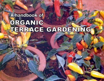 Terrace Garden India Handbook And Guide India Balconies Gaden