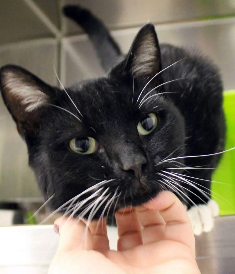 SICK OUT OF TIME NAME Burton ANIMAL ID BREED DSH