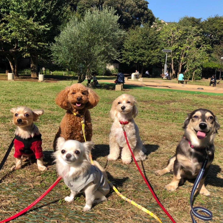 幼稚園 みんなで公園へお散歩 動物 トイプードル ティーカッププードル