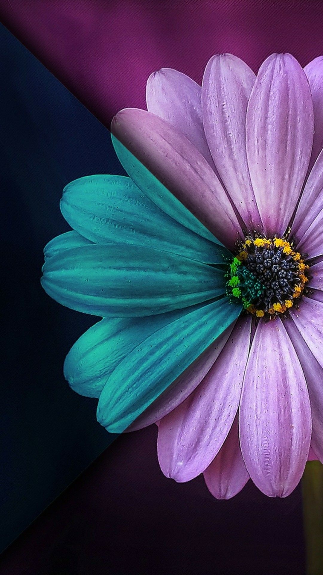 Pin by shashi singh on iPhone 6 Daisy wallpaper, Flower