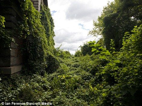 The fantastic story of the now-completely-overrun North Brother Island, a dilapidated leper colony just 350 yards from the Bronx--and about the same distance from Rikers Island.  (Includes beautiful photos!)
