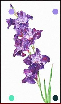 Watercolor Painting Of Gladiolus Mariko Irie Fine Art Purple